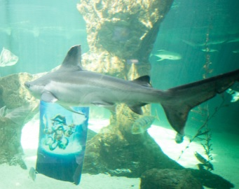 #skylanderszoo Wash Buckler tiburones en el Zoo